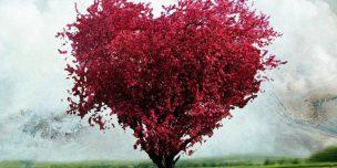Поздравления на 27 лет свадьбы Красного дерева годовщину